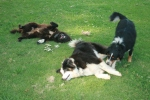 Blackie, Patches in middle, Levi left