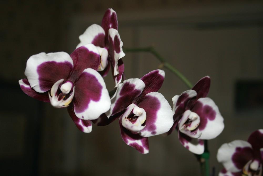 Orchids (3/4)